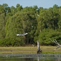 Wildman Fishing Tours - Wetlands